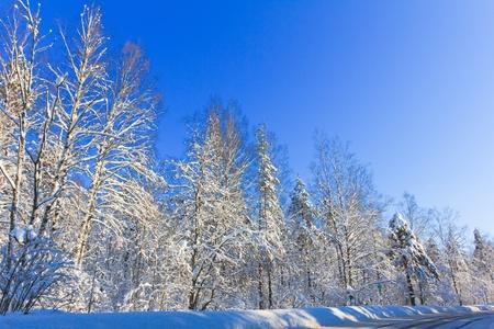 Eternal Frozen Winter Stock Photo - 10719065