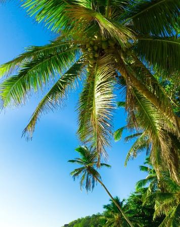 overhanging: Overhanging Jungle Getaway