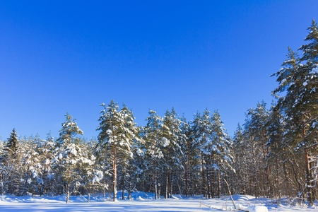 View of Christmas Trees  Stock Photo - 10656536