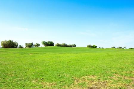 Perfect Grass Area  photo