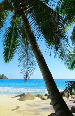 Exotic Sea Trees Stock Photo - 10656530