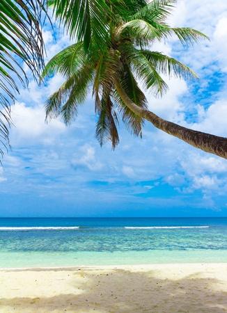frond: Sea Scene Exotic