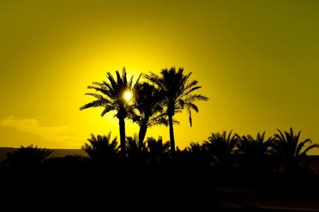 light maldives: Palms at Sunset