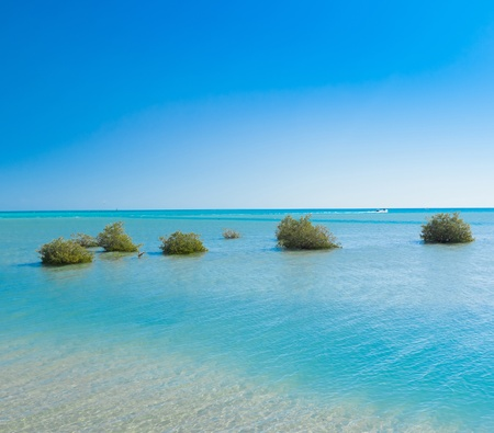 okinawa: Sea View
