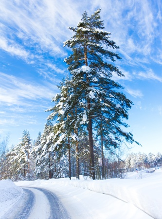 Forever Winter!  Stock Photo - 10719176