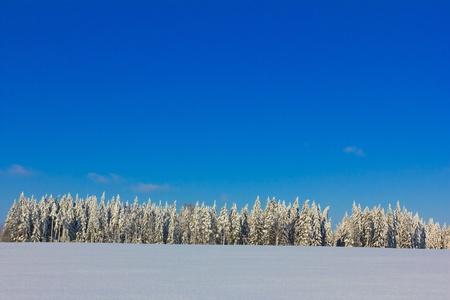 White Winter Magic Stock Photo - 10664688