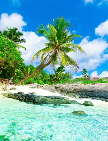 beach scene: Scene Rocks Palms  Stock Photo