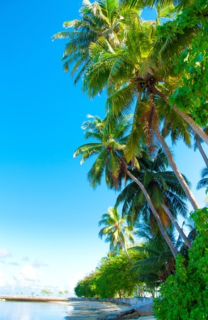 palm garden: Palms Park Plants  Stock Photo