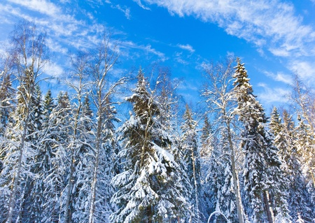Winter trees in the mountains covered with shiny snow  Stock Photo - 10656533