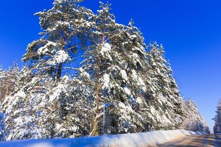 Hot Winter snow Stock Photo - 10603258