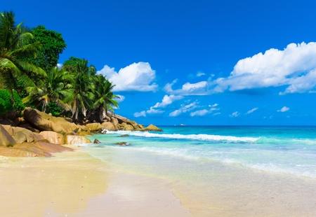 Panorama Palms Summertime
