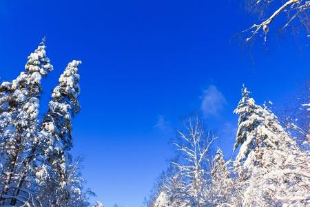 Shiny snow  photo