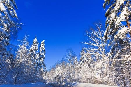 Shiny snow Stock Photo - 10603256