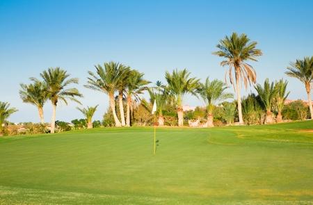 fairway: Wide Green Fairway and Palms