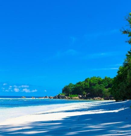 jungle scene: Sea Tranquility Palms
