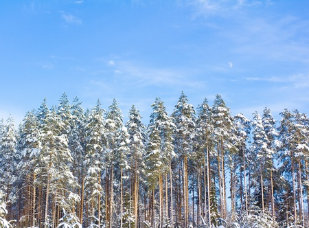 Snow Covered Trees Stock Photo - 10667454