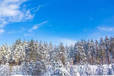 Beautiful Winter Landscape with snow covered trees Stock Photo - 10667496