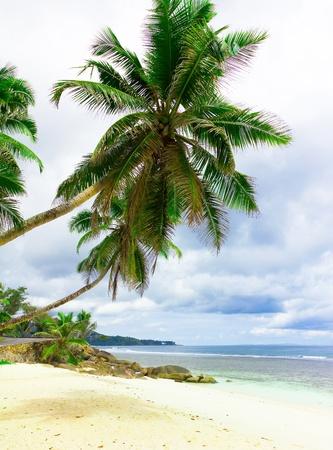 Dream Shore Summertime  photo