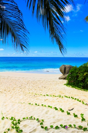 Leaves Sea Getaway  Stock Photo - 10656294