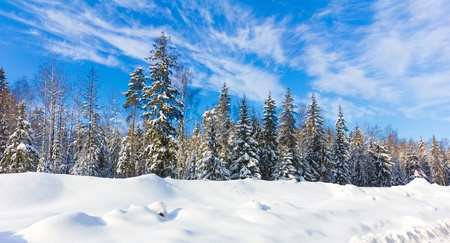 reigns: Bright Winter Reigns  Stock Photo