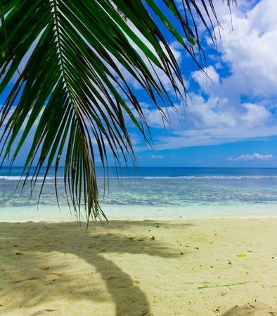 Exotic Sea Overhanging Stock Photo - 10606121