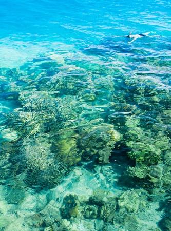 light maldives: Snorkeling in a Coral Sea  Stock Photo