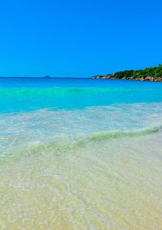 Summertime Palms Sea