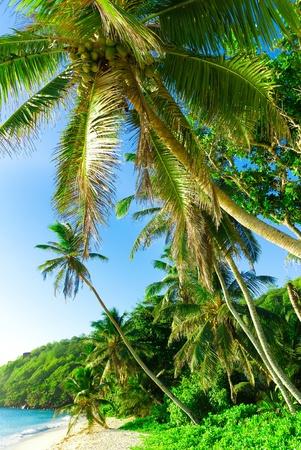 Trees Paradise Getaway  Stock Photo