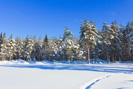 christmas scenic: View of Christmas Trees
