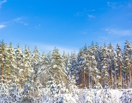 Hot Winter snow Stock Photo - 10667518