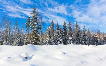 hoar: Joyful Happy Winter  Stock Photo