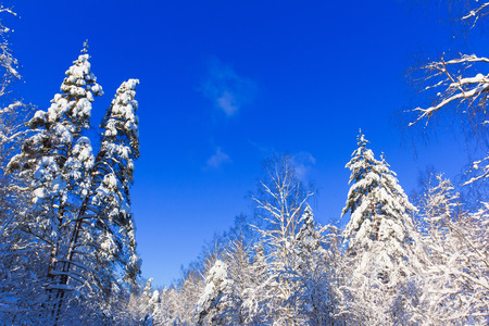 reigns: Bright Winter Reigns