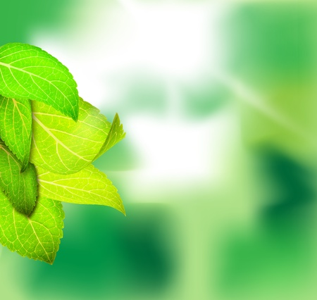 Green leaves with green background on sunny day Stock Photo