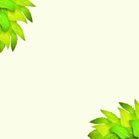 Branch of leaves at corner on light green background