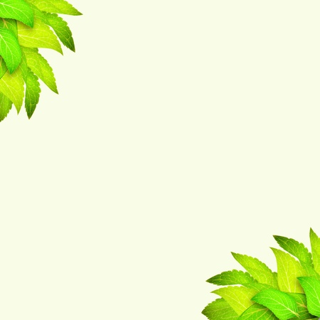 Branch of leaves at corner on light green background