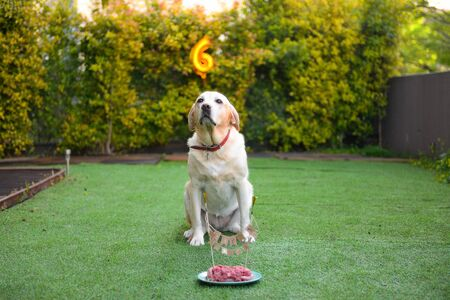 Birthday in dogs. Dog's birthday party. Cake for the dog with meat in garden. Stock Photo - 128332204