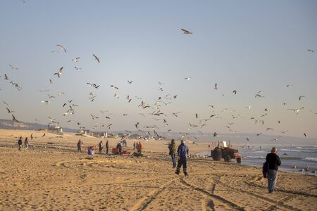 A lot of seagulls in the beach, Beautiful sunset beach with a seagulls. Fishermen.