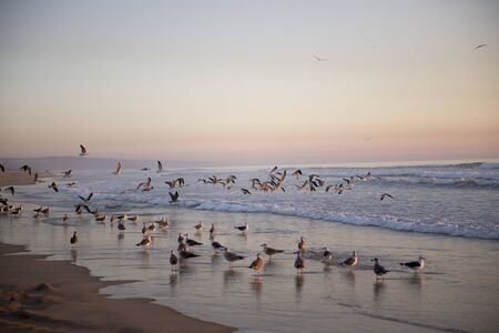 A lot of seagulls in the beach, Beautiful sunset beach with a seagulls.