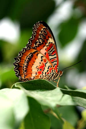 brown butterfly on green leaf  photo