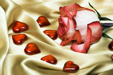 red rose on satin with hearts  photo