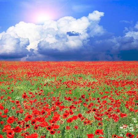 Wiese mit vielen roten Mohnblumen