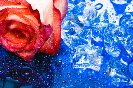ice with rose on blue background Stock Photo - 3382969