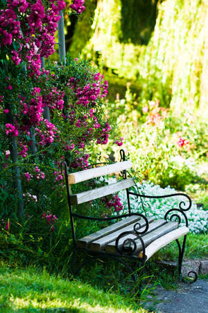 roses garden: bench in the garden with roses  Stock Photo