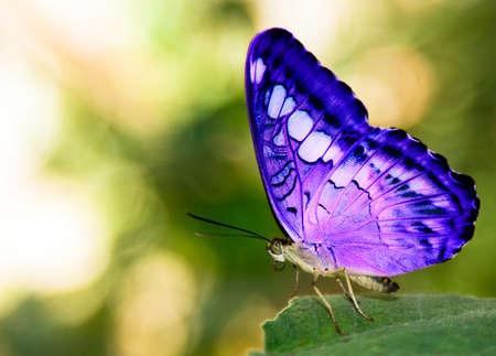 緑の葉の上の青い蝶