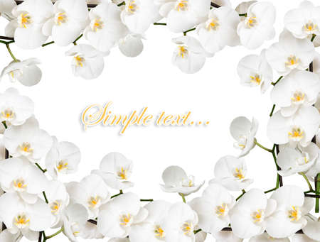 congratulatory frame with many orchids  Stock Photo