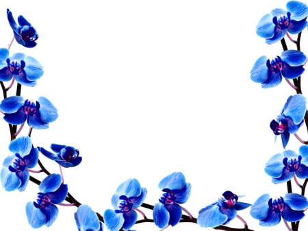 blue orchid: congratulatory frame with many orchids  Stock Photo