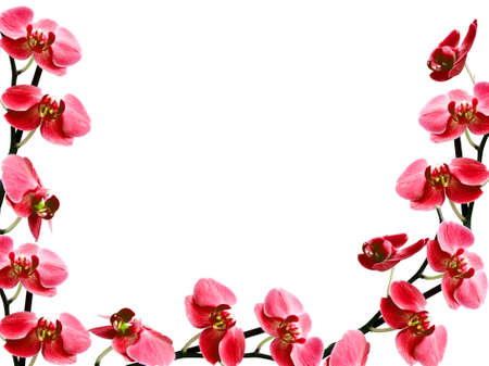 congratulatory frame with many orchids  photo