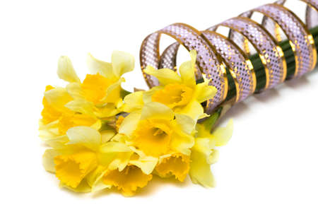 yellow daffodil with pink ribbon Stock Photo - 4664478