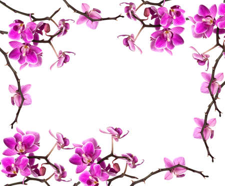 orchid isolated on white background  Stock Photo - 4722037