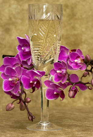 glass with champagne and orchid Stock Photo - 5269662